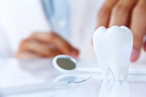 Model zdrowego zęba